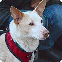 Adopt A Pet :: Brady Quinn - Jersey City, NJ