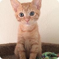 Adopt A Pet :: Cash - Gainesville, FL