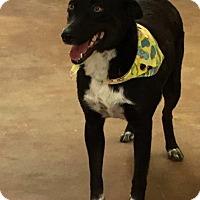 Adopt A Pet :: Roxy - Fayetteville, AR