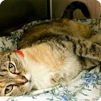 Adopt A Pet :: Minnie - Lunenburg, MA