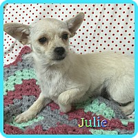 Adopt A Pet :: Julie - Hollywood, FL