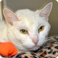 Adopt A Pet :: Lucy Lu - Wheaton, IL