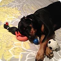 Adopt A Pet :: Callie/referral - Laurel, MT