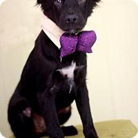 Adopt A Pet :: Toby - Dalton, GA