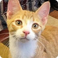 Adopt A Pet :: Spyro - Gettysburg, PA