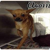 Adopt A Pet :: A401184 - San Antonio, TX