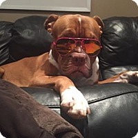 Adopt A Pet :: JAX - Regina, SK