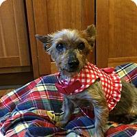 Adopt A Pet :: Junie - Doylestown, PA