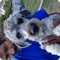 Adopt A Pet :: GIRLY - San Antonio, TX