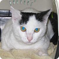 Adopt A Pet :: Hailey - Wharton, TX