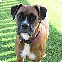 Adopt A Pet :: Elsa - House Springs, MO