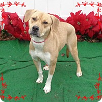 Adopt A Pet :: LAINEY - Marietta, GA