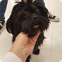Adopt A Pet :: Frannie - Woodbridge, VA