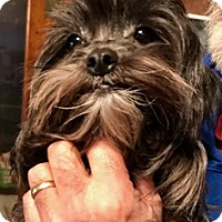 Adopt A Pet :: Pixie - ST LOUIS, MO
