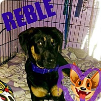 Adopt A Pet :: Reble - Sacramento, CA