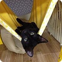 Adopt A Pet :: Onyx - Monroe, GA