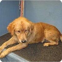 Adopt A Pet :: Blossom - Denver, CO