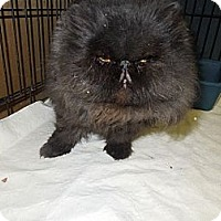 Adopt A Pet :: Salem - Medina, OH