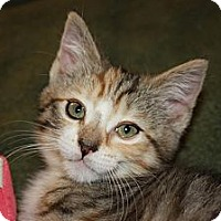 Adopt A Pet :: Kiley (LE) - Little Falls, NJ