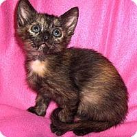 Adopt A Pet :: Sprinkles - Richmond, VA