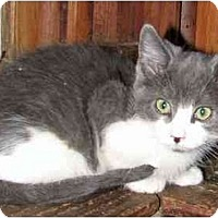 Adopt A Pet :: Tango - Davis, CA