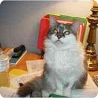 Adopt A Pet :: Jada - Hamburg, NY