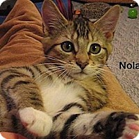 Adopt A Pet :: Nolan - Portland, OR