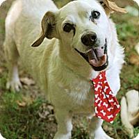 Adopt A Pet :: Winston - Homewood, AL