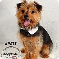 Adopt A Pet :: Wyatt - Omaha, NE