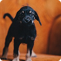 Adopt A Pet :: Mary Anne - Portland, OR