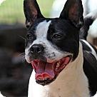 Adopt A Pet :: Fantella