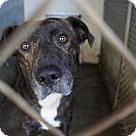 Adopt A Pet :: Nick* - Henderson, NC