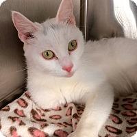 Adopt A Pet :: Opal - Webster, MA