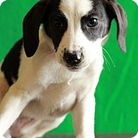 Adopt A Pet :: Freda - Waldorf, MD