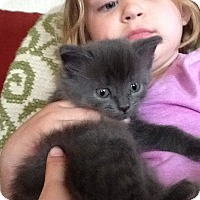 Adopt A Pet :: Sawyer - Sparta, NJ