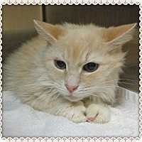 Adopt A Pet :: SPORT - Marietta, GA