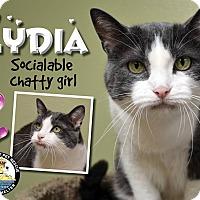Adopt A Pet :: Lydia - Davenport, IA