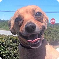 Adopt A Pet :: Boo - Surrey, BC
