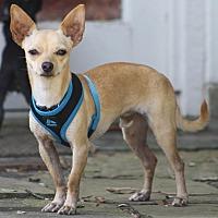 Adopt A Pet :: Tyson - Puppy - Dallas, TX