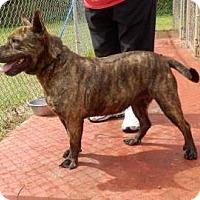 Adopt A Pet :: Fuzzball - Lawrenceville, GA