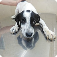Adopt A Pet :: Duncan - Trenton, NJ
