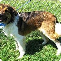 Adopt A Pet :: Bogie - Oswego, IL