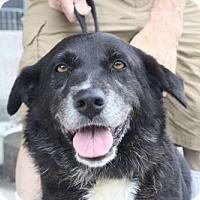 Adopt A Pet :: Nancy - Rockville, MD