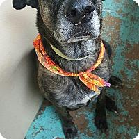 Adopt A Pet :: Deborah - Pottsville, PA