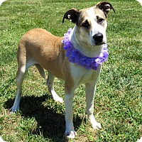 Adopt A Pet :: LUCY - Lexington, NC