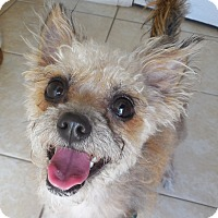 Adopt A Pet :: Twinkle - Ormond Beach, FL