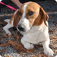 Adopt A Pet :: Beamer - Ridgeland, SC