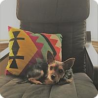 Adopt A Pet :: Kayla - Austin, TX