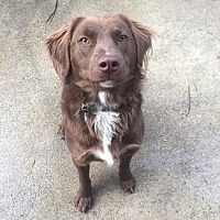Adopt A Pet :: HERSHEL - Pt. Richmond, CA