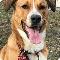 Adopt A Pet :: Simon - Spring Lake, NJ